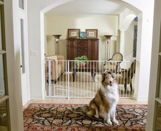 Maxi extra Tall Walk Thru dog cat steel Gate Room fence w/ Pet Door 37