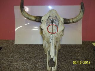 Very Beautiful REAL Hand Painted Steer Skull long Horn Bull Cow Skull