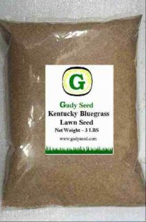 Kentucky Bluegrass Grass Seed   Beautiful Lawn 6 lbs  Direct from