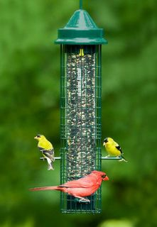Squirrel Proof Bird Seed Feeder Cardinal Finch Songbirds Buster